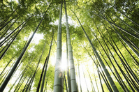 Bamboo forest Stock photo [668052] Bamboo