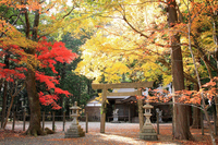 Autumn leaves of Yabashira shrine Stock photo [668631] World