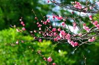 紅梅と竹林