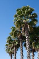 Palm tree Stock photo [752720] Palm