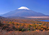 Panorama stand of autumn leaves and Mount Fuji Stock photo [755474] Mt.