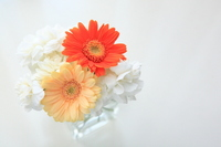 Gerbera Stock photo [755714] Gerbera