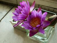 Water lilies Stock photo [756130] Lotus