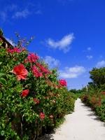 Road of Okinawa flower Stock photo [758515] Okinawa