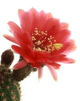 Cactus (beauty circles) Stock photo [831805] Cactus