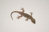 Gecko Stock photo [834570] Gecko