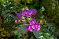Phalaenopsis Stock photo [834882] Phalaenopsis