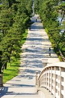 Soka pine trees Stock photo [838991] Soka