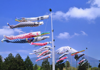 Carp and Mount Fuji Stock photo [840722] Mt.