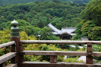 Fresh green of Hase-dera Temple Stock photo [841799] Hase