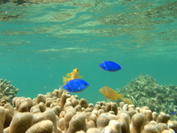 Fish of blue and yellow Stock photo [843041] Marine