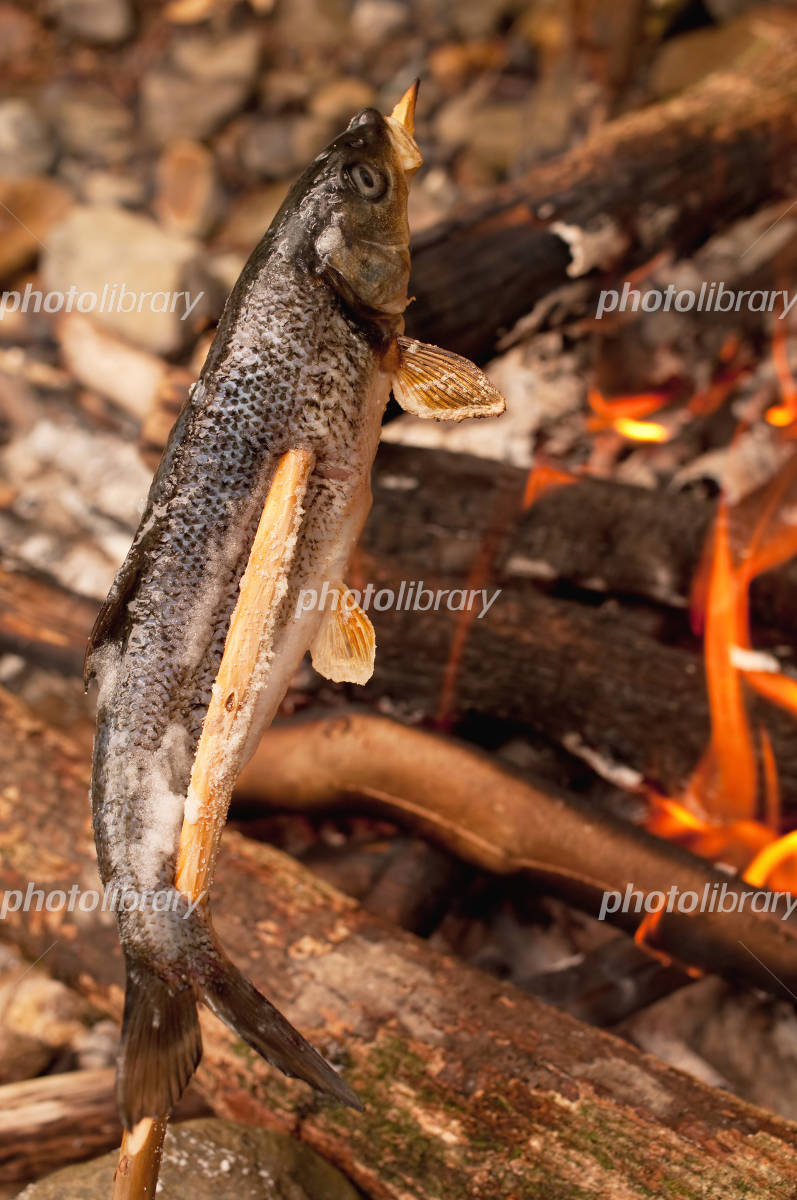 Bonfire and grilled fish Photo