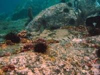 Hokkaido flounder Stock photo [902016] Diving