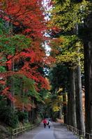 中尊寺の杉並木