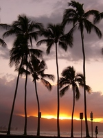 Palm trees and sunset Stock photo [997563] Hawaii