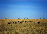 Africa Kenya Minimize Stock photo [1000601] Landscape