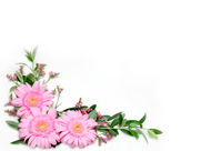 Gerbera Stock photo [1004301] Gerbera