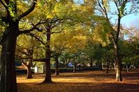Autumn leaves Stock photo [1006097] Fallen