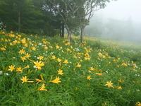 Day lily of Kirifuri Highlands Stock photo [1006439] Kirifuri