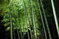 Oiso of bamboo forest Stock photo [1112453] Bamboo