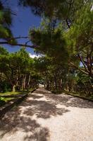 Ryukyu pine Stock photo [1116115] Ryukyu