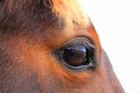 Eye horse Stock photo [1117528] Hokkaido