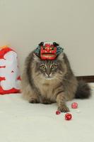 Cat Lion Dance Stock photo [1120638] The