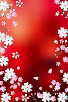 Cherry [1120808] Flower