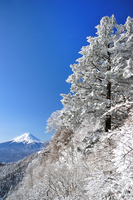 Fog deposit of large tree and Mount Fuji Stock photo [1230744] Rime