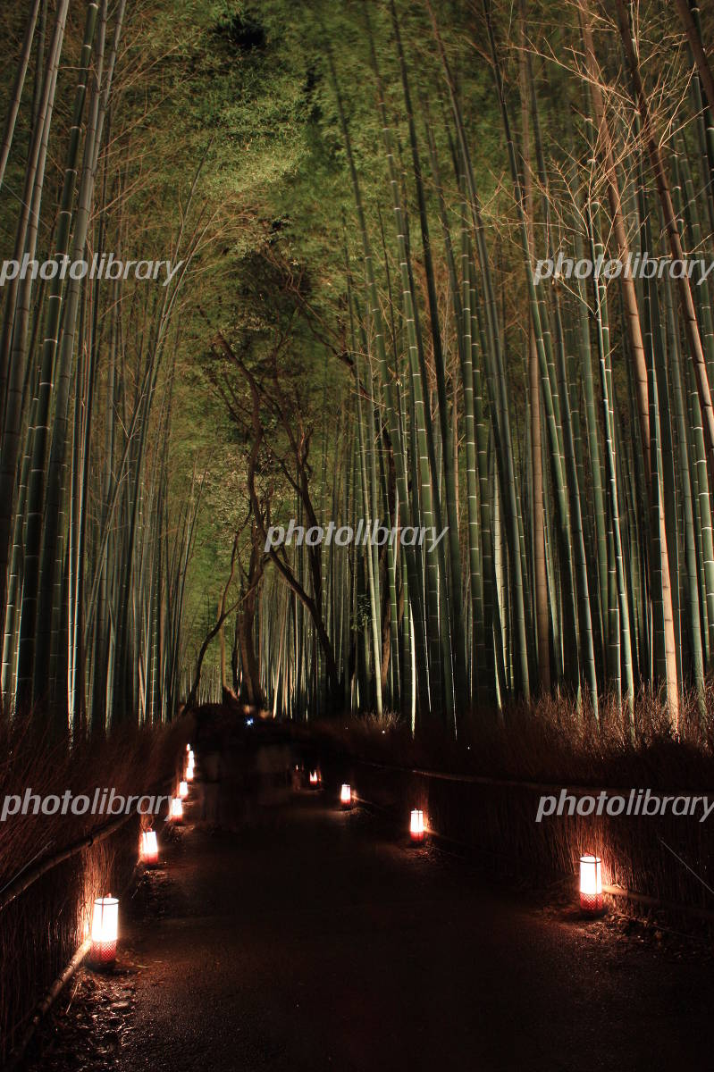 Bamboo forest light up Photo