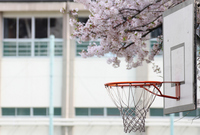 Basketball Stock photo [1316137] Basket