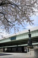 Sakura and Nihonbashi Stock photo [1317085] Bridge