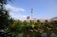 Japanese garden and Tokyo Sky Tree Stock photo [1317093] Tokyo