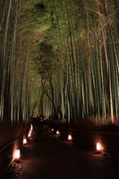 Bamboo forest light up Stock photo [1317455] Kyoto
