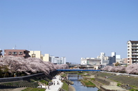 Landscape with Yokohama Totsuka Kashio River cherry Stock photo [1319533] Blue