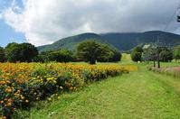 Plateau of marigold Stock photo [1320521] Plateau