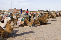 Tourism camel to wait in Tunisia desert Stock photo [1324211] Tourism