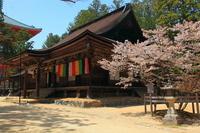 Taikai-do of Koyasan podium cathedral Stock photo [1399417] Wakayama