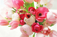 Pink Arrangement Stock photo [1401395] Flower