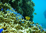 Fish of coral reefs Stock photo [1401916] Coral