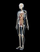 Human body [1404968] Through
