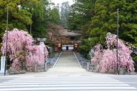 Koyasan Sohonzankongobuji Stock photo [1406907] Wakayama