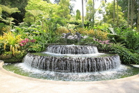 Orchid Garden Stock photo [1494029] Singapore