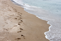 Footprints in sand Stock photo [1494533] Sandy