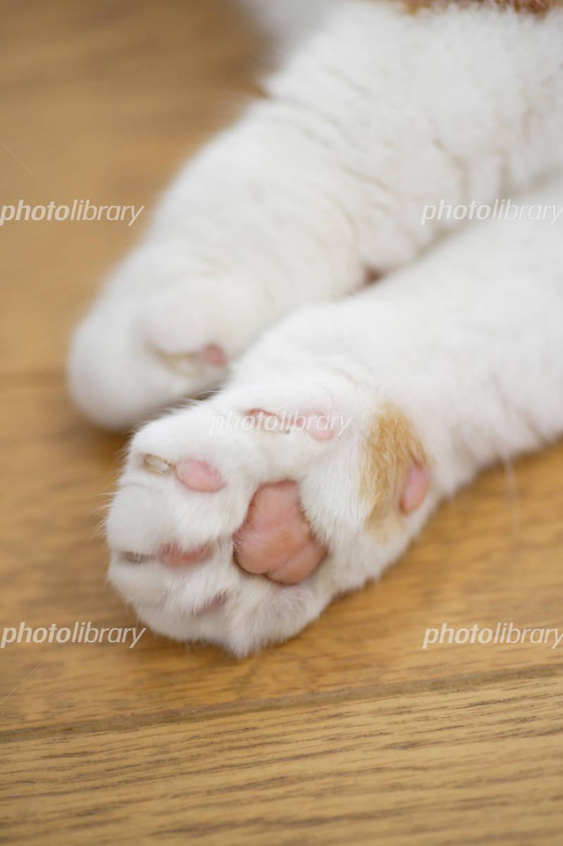 癒されたい 仕事疲れ 心のケアに癒し猫はいかが ほっこり癒される猫画像