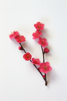 Red plum flower Stock photo [1597902] Red
