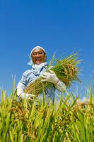 Harvesting Stock photo [1600271] Harvesting