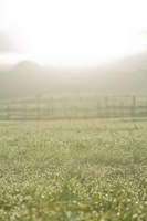 Grassland to get wet in the morning dew Stock photo [1601733] The