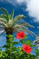 Hibiscus and palm Stock photo [1606248] Hibiscus