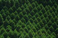 Cedar molding Stock photo [1606628] Forest